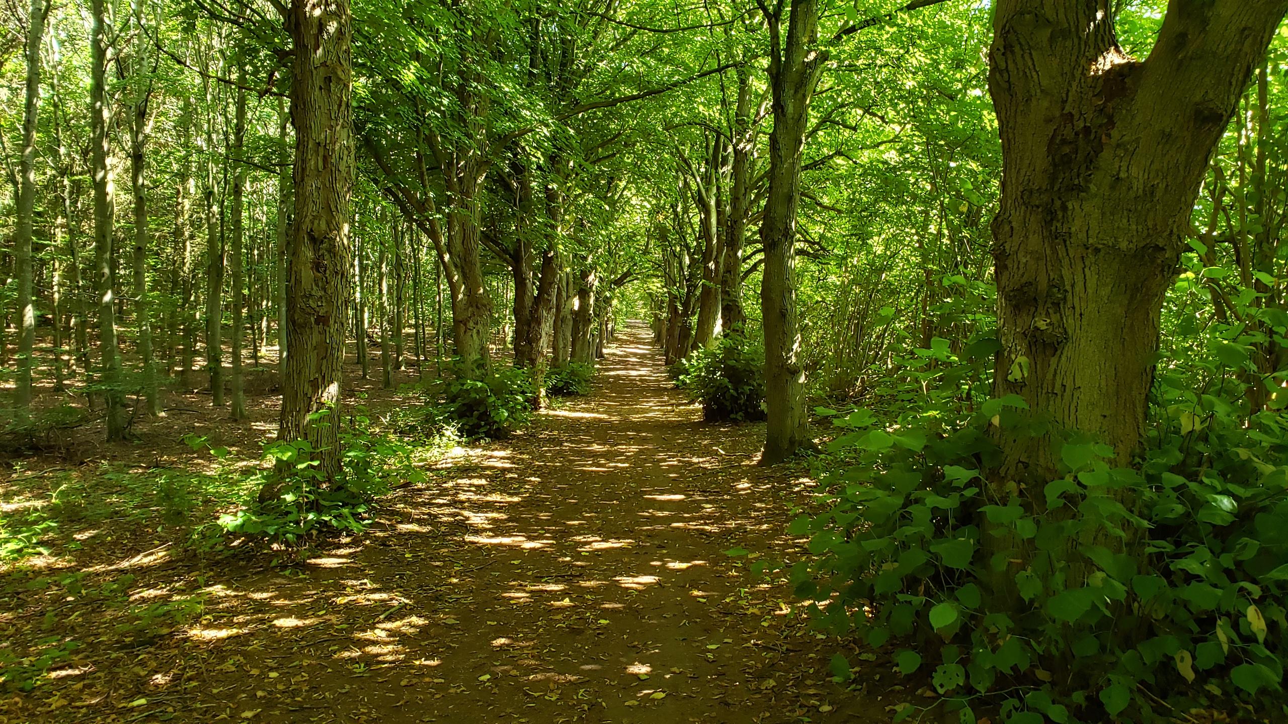 Path outside Holbæk, Denmark in the summer